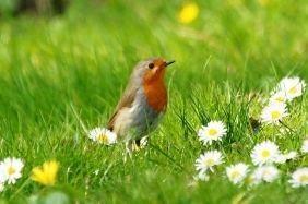 Frühlinggefühle