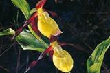 Aldein - Blume