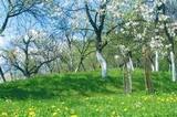 Frühling in Südtirol und Tirol
