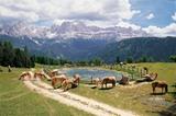 Haflinger Pferde am Wunleger mit Rosengarten