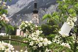 Haiminger Kirche durch Apfelbäume