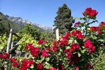 Angebotswochen mit Mobilcard für ganz Südtirol