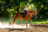 Reiten auf dem Pferd