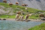 Pferde am Steinsee