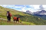 Pferde auf der Plose