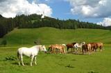 Pferde im Ridnauntal