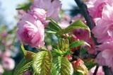Südtirol Frühling