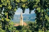 Traminer Kirchturm mit Weintrauben