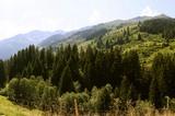 Wanderparadies Wildschönau